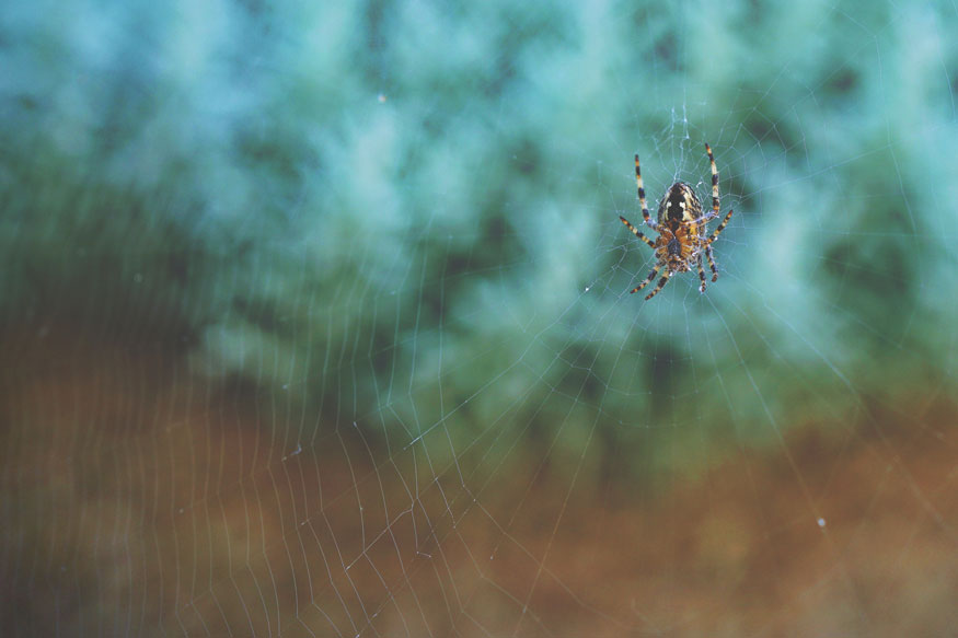 Unsuspecting ways spiders can get into your home